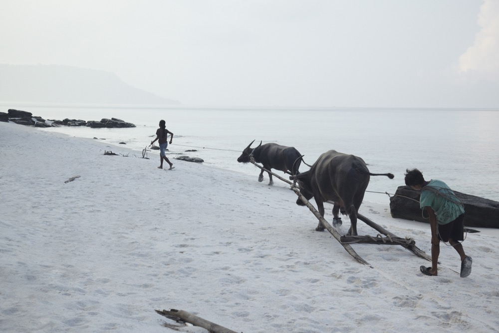 children-with-buffalos-on-koh-rong-beach_8780